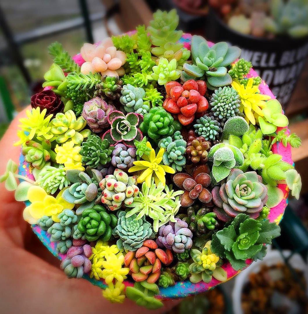 #succulent #succulentlove #gardens #gardening #gardenideas #gardeningtips #succulents #decorhomeideas