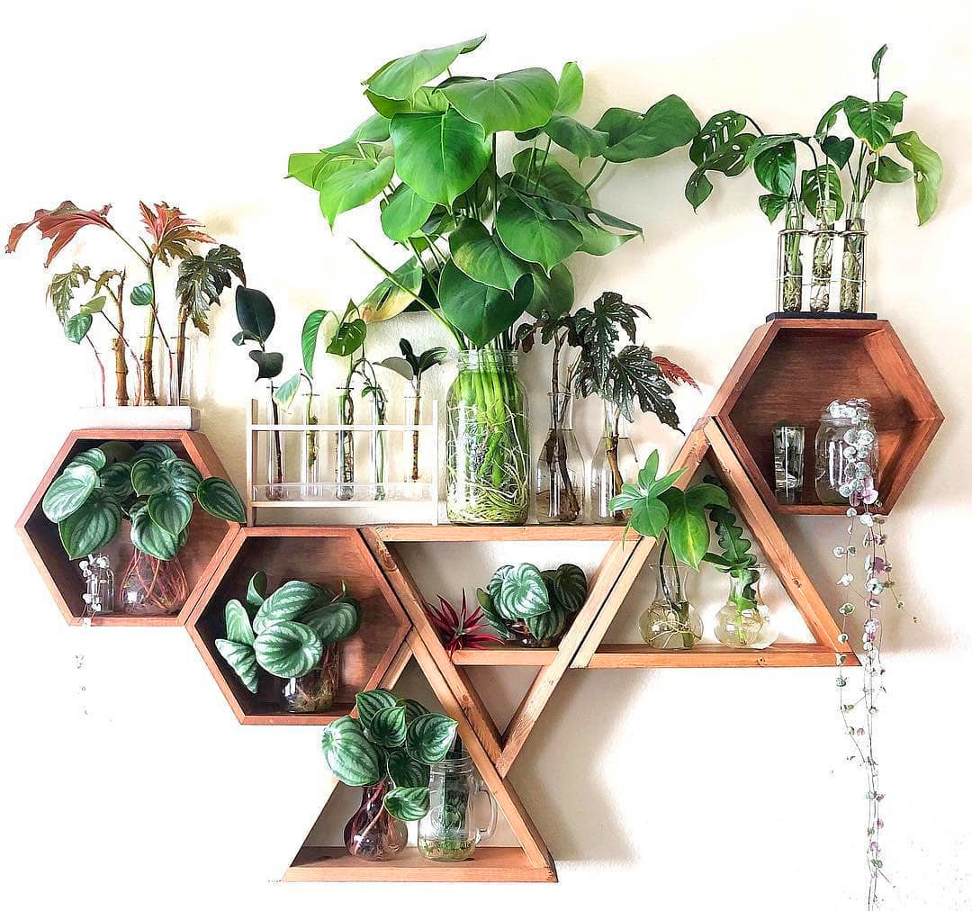 60+ Beautiful Indoor Plants Design in Your Interior Home