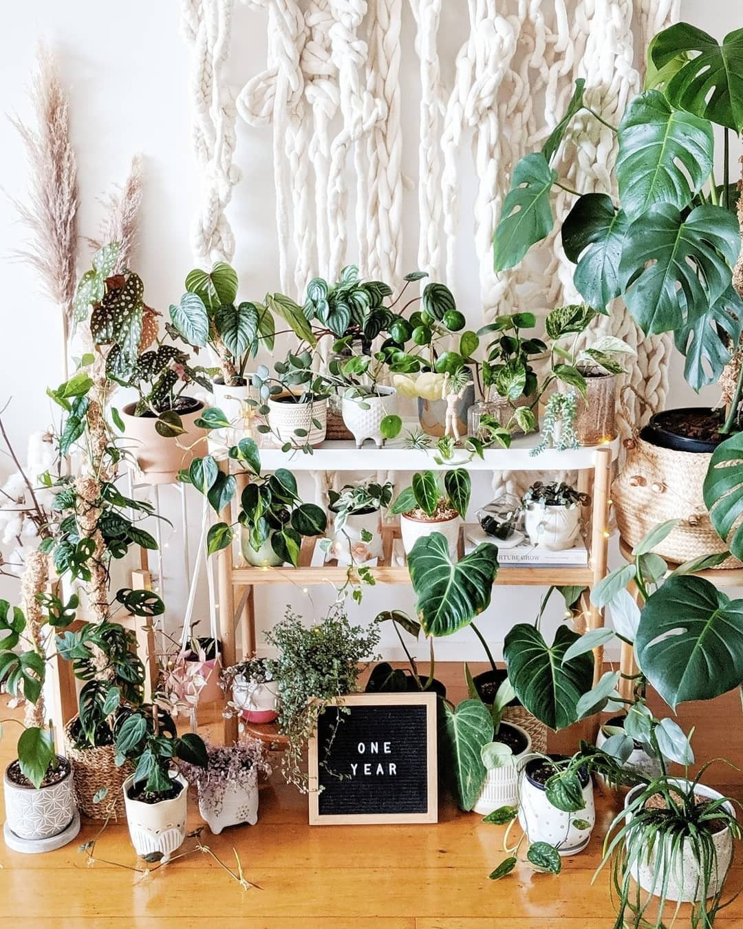 40+ Beautiful Plants Ideas For Home Decor