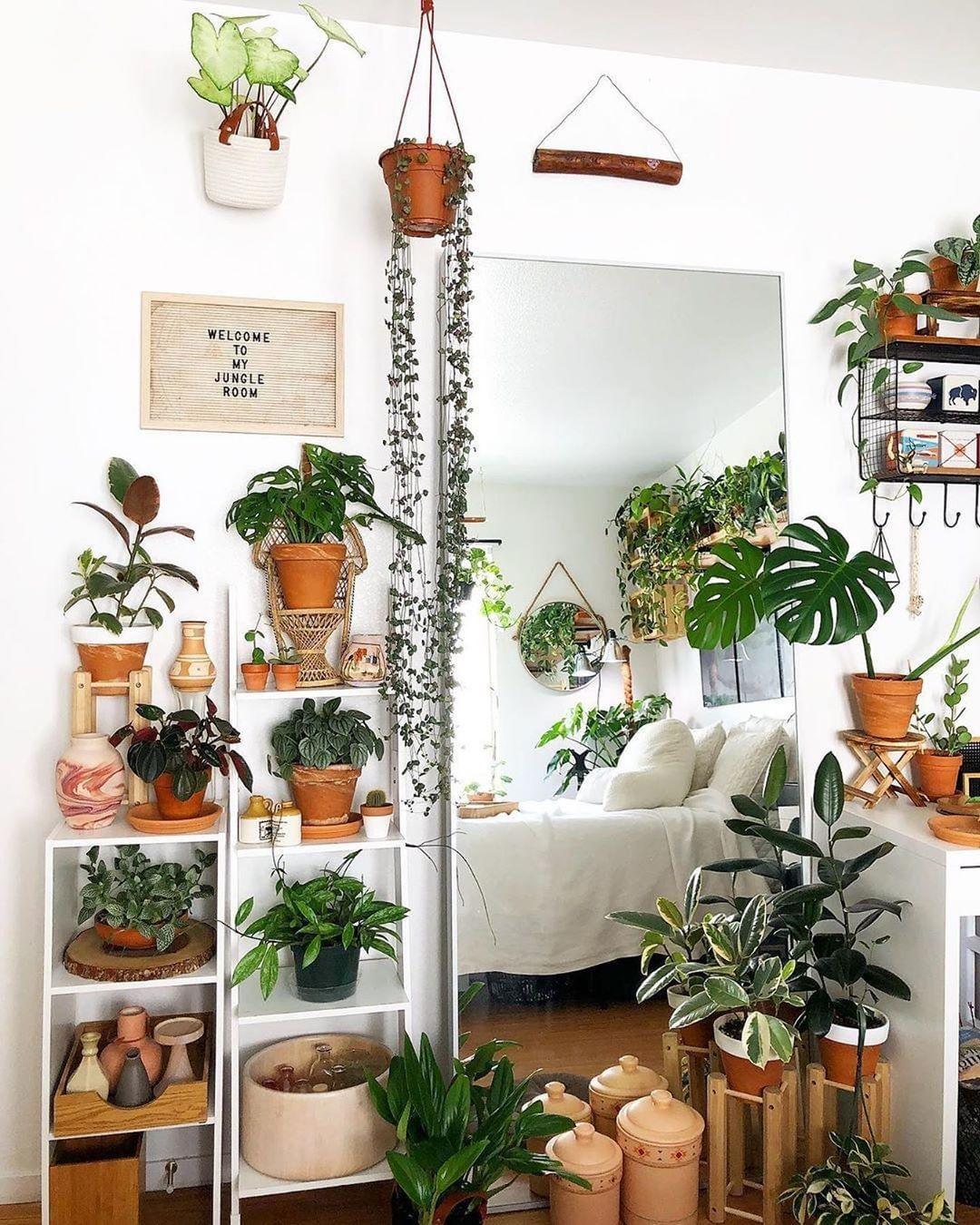 40+ Beautiful Plants Ideas For Home Decor