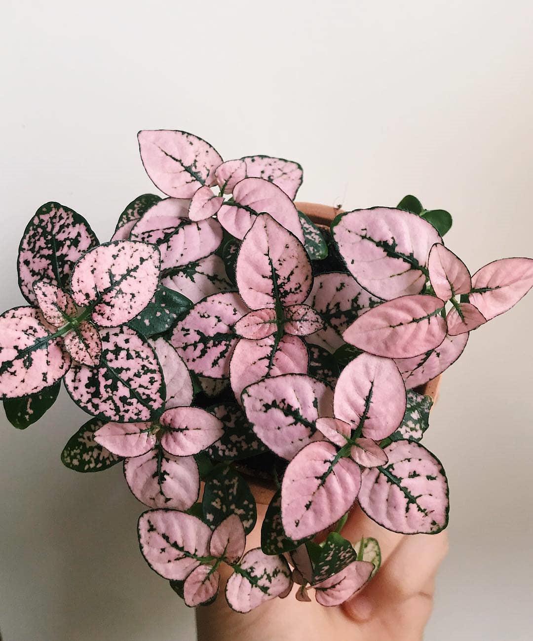 45 Beautiful Indoor Plant Ideas