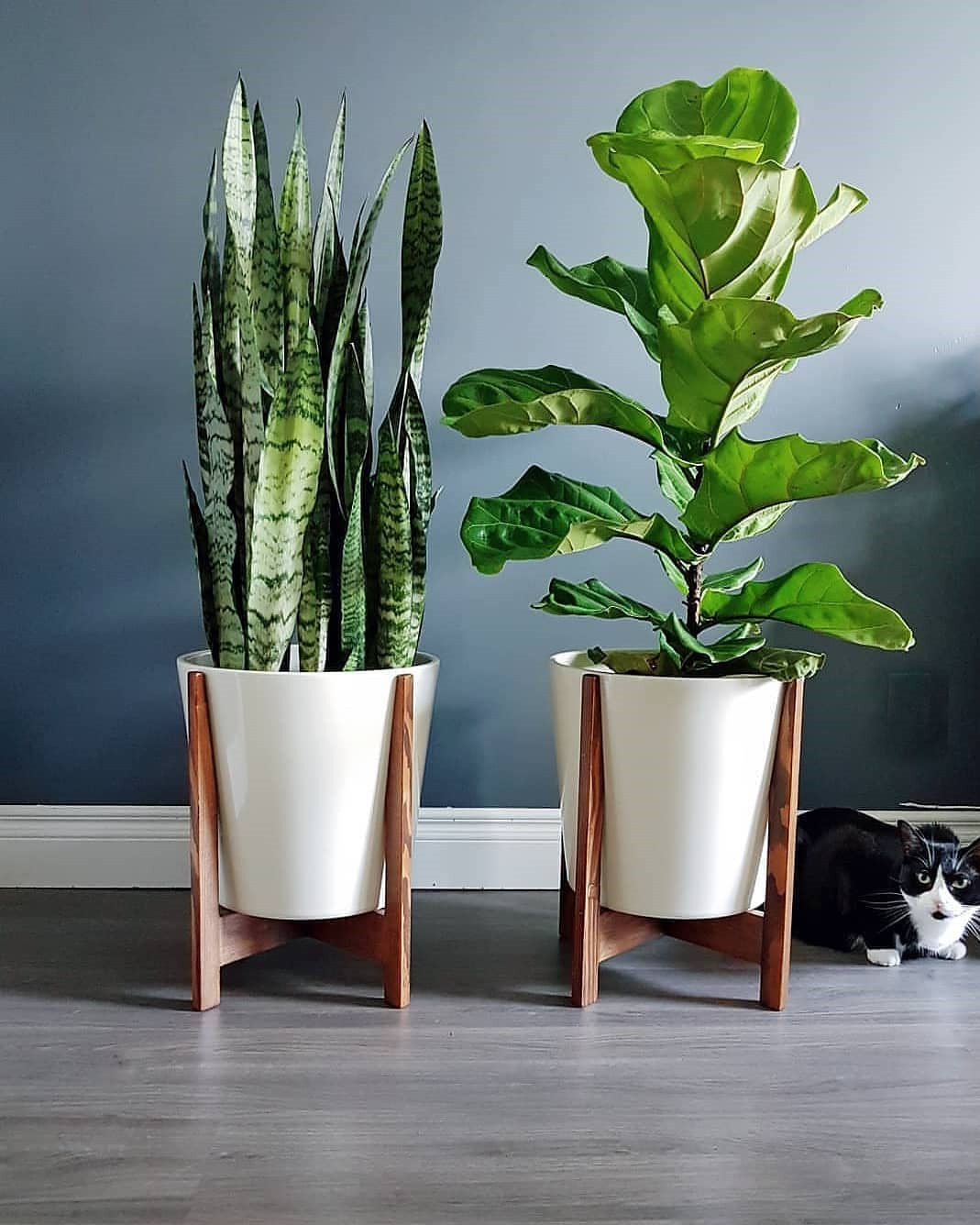 45 Beautiful Indoor Plant Ideas