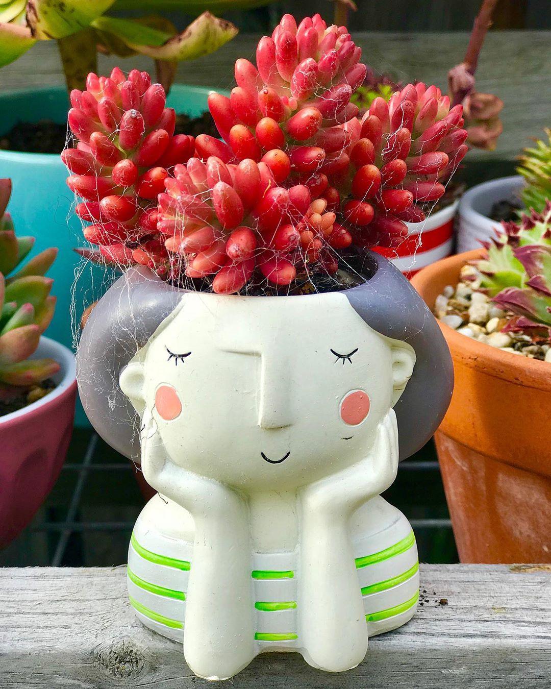 55 Easy DIY Succulents Mini Garden Ideas #Succulents