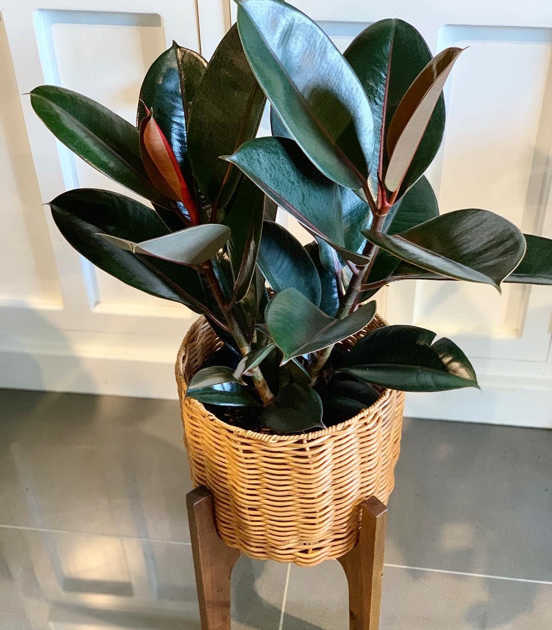 65 Best Indoor Plants For Apartments 2020
