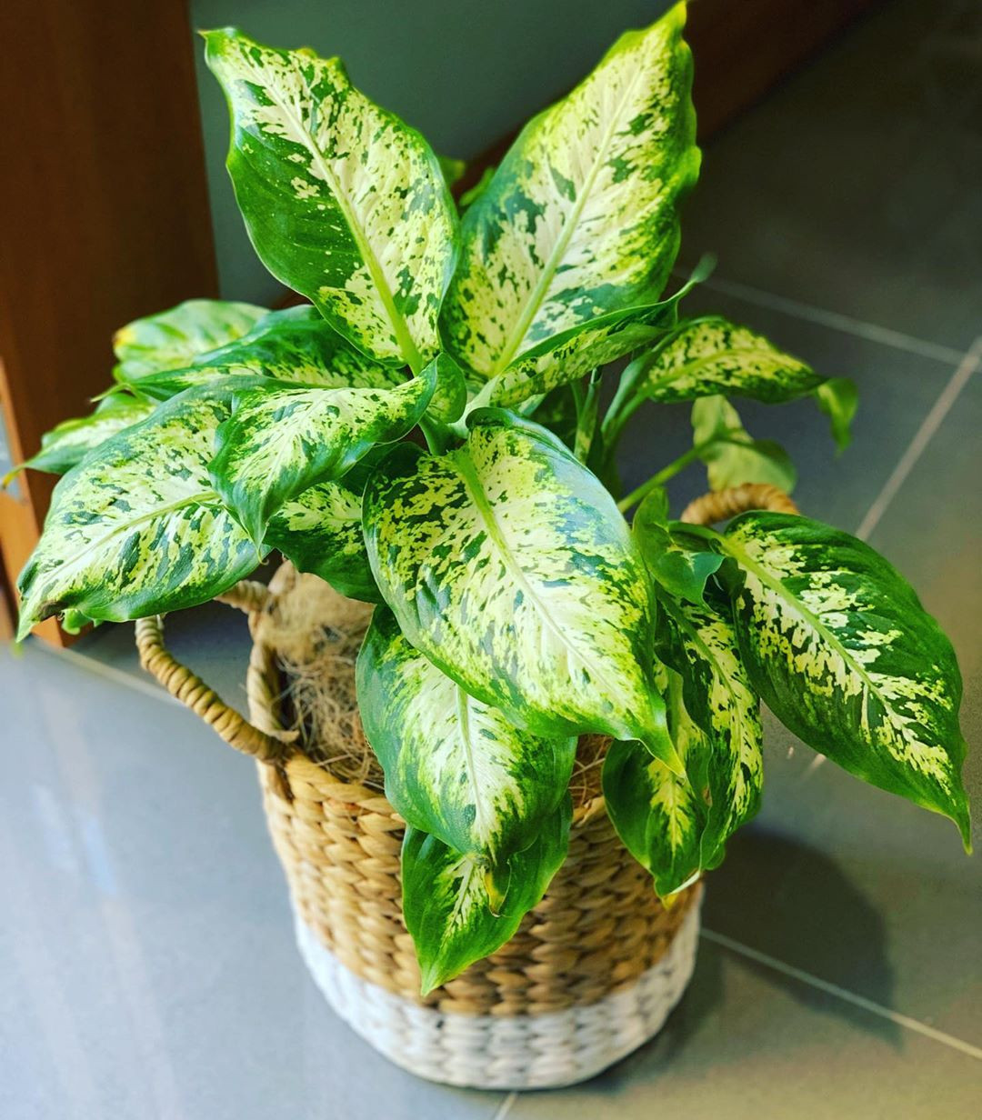 65 Best Indoor Plants For Apartments 2020